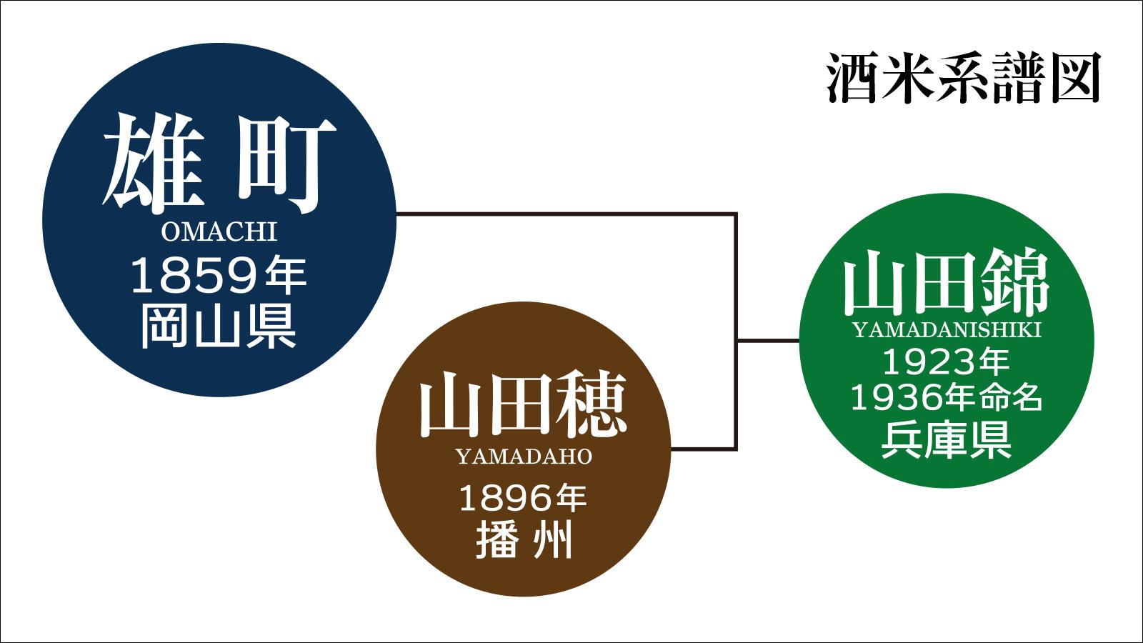 「雄町」は、山田錦の親にあたる日本最古の混血のない原生種